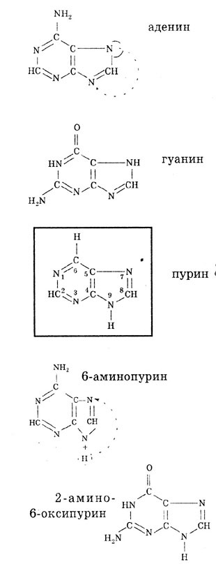 Структурные формулы азотистых